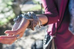 Try segway tour  Kouklia snake park